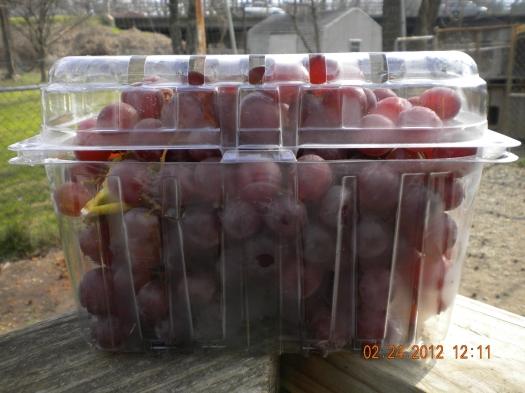 Aldi's red grapes are delicious and make me happy!